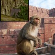 Opičky z Tomb Raider 3