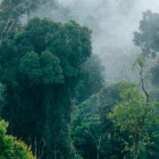 Prales v Indii