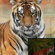 Tygr indický - Tomb Raider 3